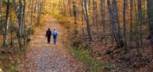 Prachtige bossen rondom Landgoed de Biestheuvel