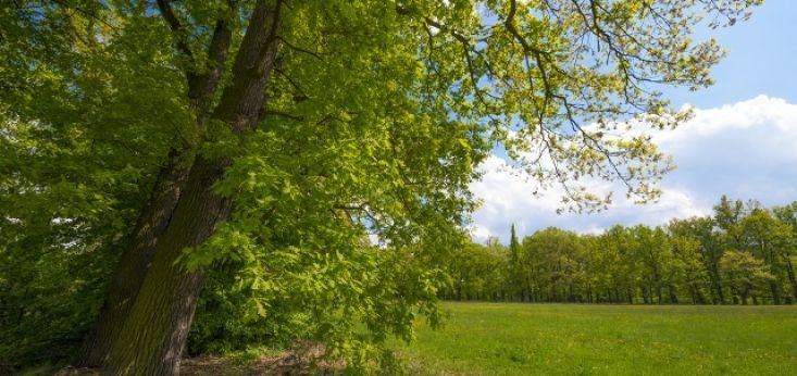 Geniet van de natuur op Landgoed de Biestheuvel