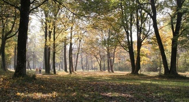 Ontdek met de huifwagen de Brabantse natuur op Landgoed de Biestheuvel