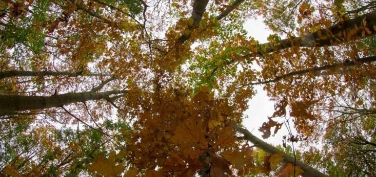 Een prachtig herfstplaatje, Landgoed de Biestheuvel