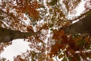 Herfst in de lucht, op Landgoed de Biestheuvel