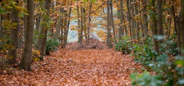 Herfstsfeer bij Landgoed de Biestheuvel