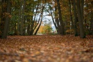 Een mooi wandelpad op Landgoed de Biestheuvel