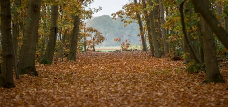 Herfst Landgoed de Biestheuvel