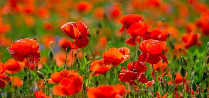 Bloemen bij Landgoed de Biestheuvel