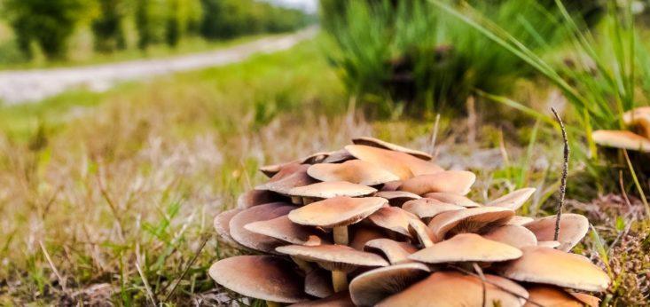 Natuur bij Landgoed de Biestheuvel