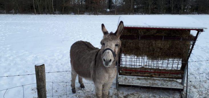 Landgoed de Biestheuvel winter, sneeuw